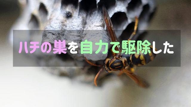 アシナガバチの巣を自力で駆除